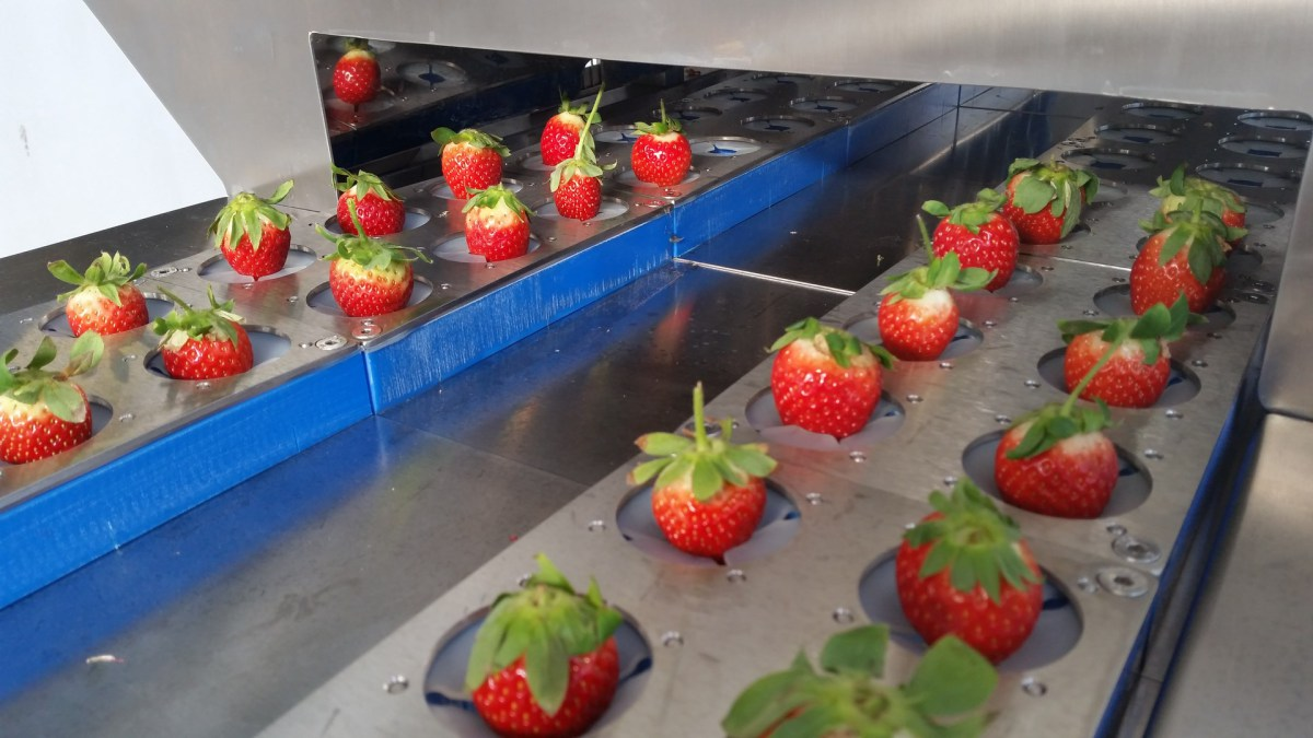 SPM – Strawberry Processing Machine